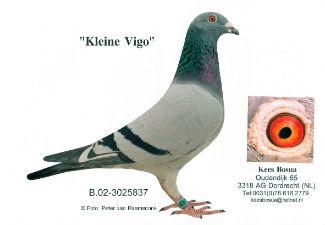 Kleine Figo