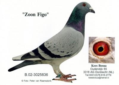 Zoon Figo