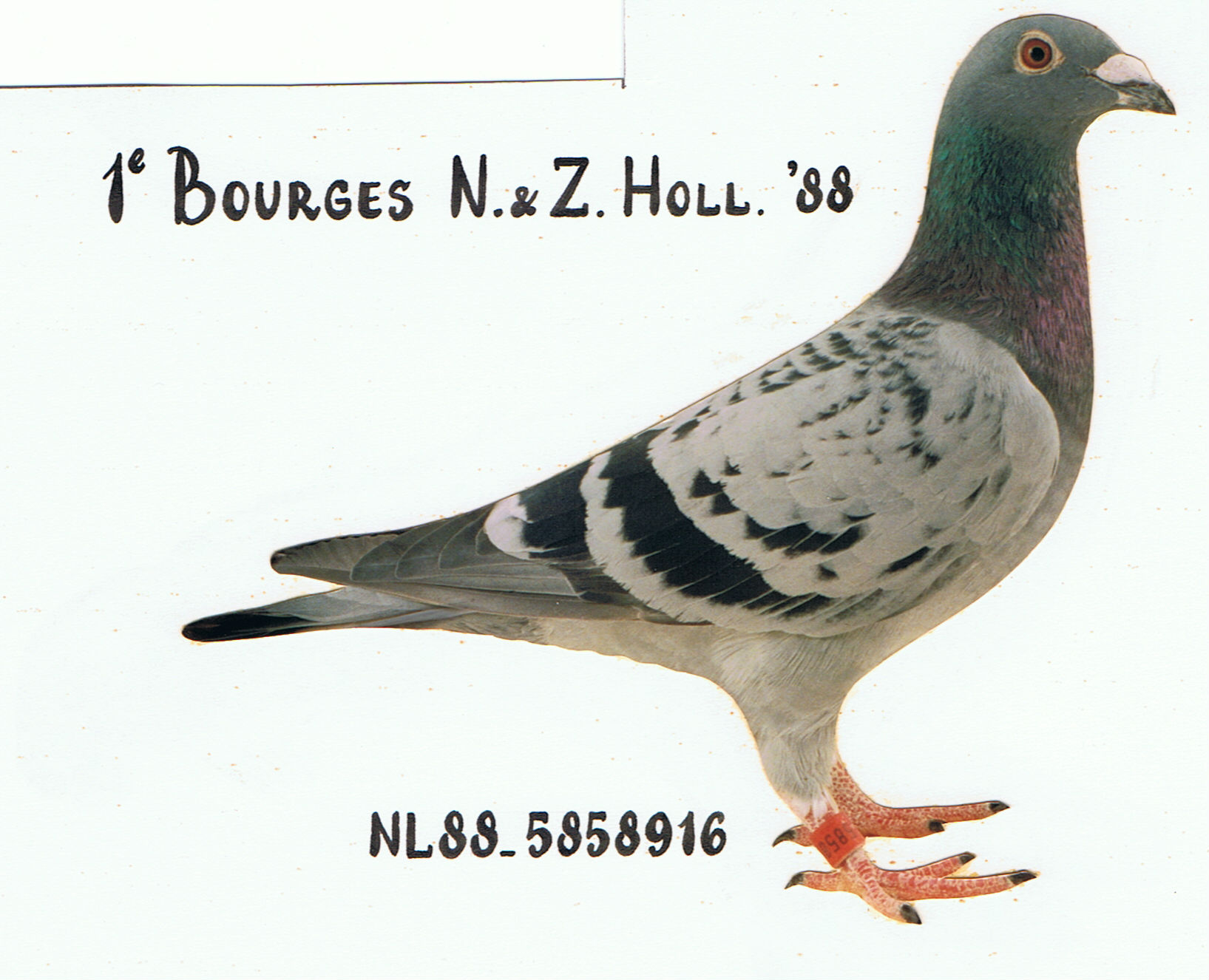 BOURGESDOFFER 1e Bourges N & Z Holland 7.708 duiven