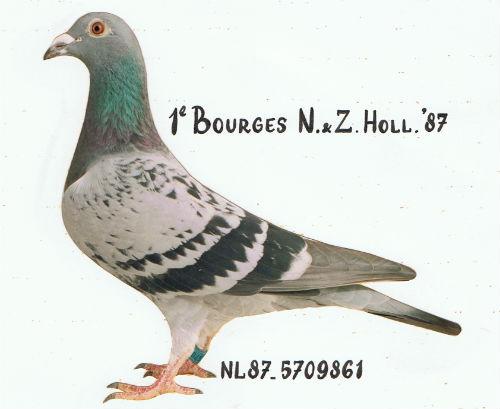 BOURGESDUIVIN 1e Bourges N & Z Holland 10.265 duiven