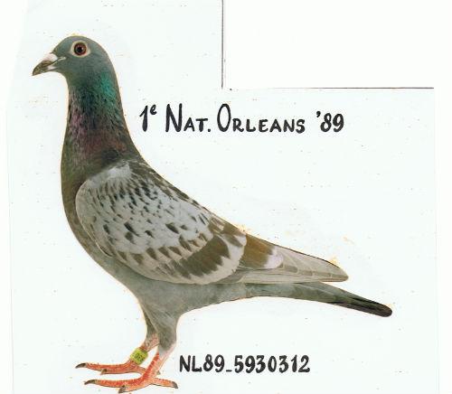 SCHALIETJE 1e Nat Orleans 10.059 duiven