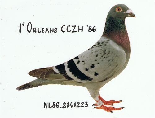 ORLEANSDOFFER 1e Orleans CCZH 11.251 duiven