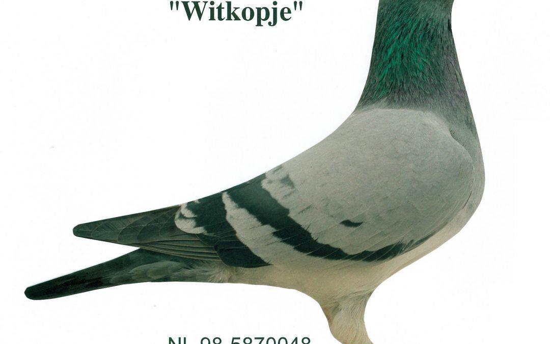 """""""Witkopje"""""""