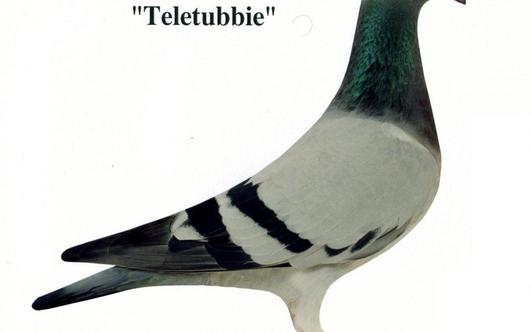 """Teletubbie"""