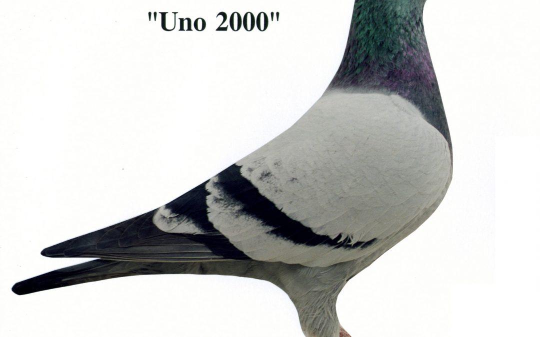 """""""Uno 2000"""""""