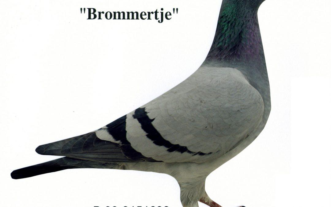 """Brommertje"""