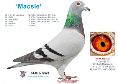 macsie